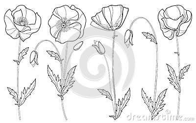 Vector set with outline Poppy flower, bud and leaves in black isolated on white background. Floral elements in contour style.