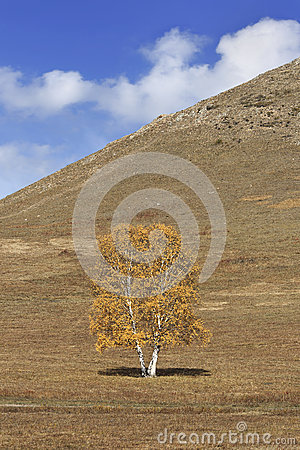 Tree in front of a mountain, Inner Mongolia, China