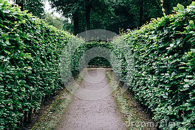 Green bushes labyrinth, hedge maze