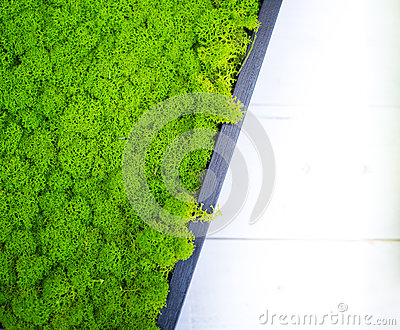 Abstract green stabilized moss surface decoration background