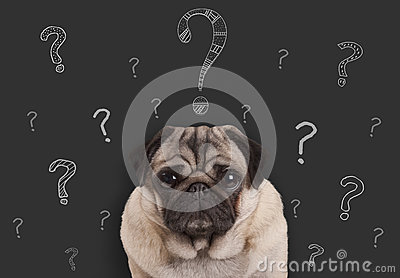 pug puppy dog sitting in front of  blackboard sign with hand drawn chalk question marks
