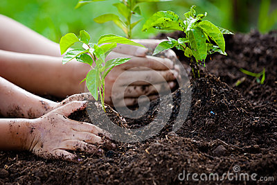 Child and parent hand planting young tree on black soil