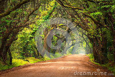Tree Lined Dirt Road Lowcountry Charleston South Carolina