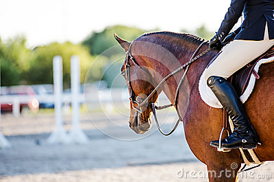 Horse and rider at an Equestrian event