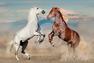 Two horses play