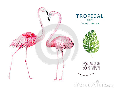 Hand drawn watercolor tropical birds set of flamingo. Exotic bird illustrations, jungle tree, brazil trendy art. Perfect