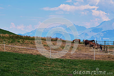 Group of horses in a pound in the alps