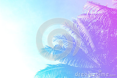 Coco palm tree on sky background. Gentle pink and blue toned photo.