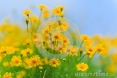 Blue Sky and Yellow Flowers