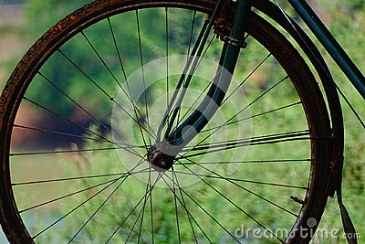 Cycle spokes