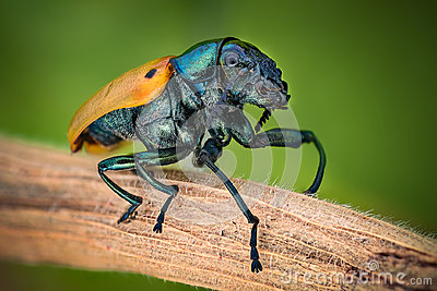Extreme magnification - Jewel Beetle