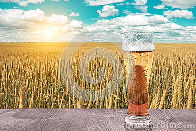 Glass of cold beer at sunset on the background of wheat field and blue sky. Recreation and relax. Fresh brewed ale.