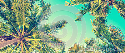 stock image of blue sky and palm trees view from below, vintage style, summer panoramic background