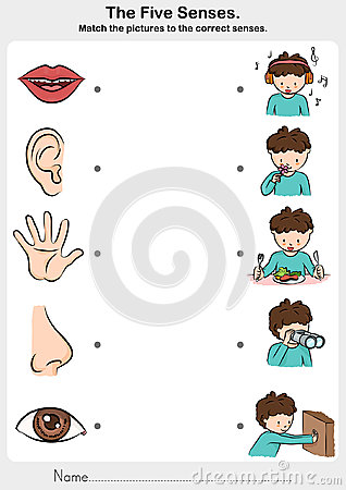 Math the picture to the correct five senses - touch, taste, hearing, sight, smell.