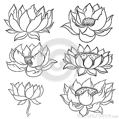 Hand drawn lotus isolate vector set and  Japanese tattoo