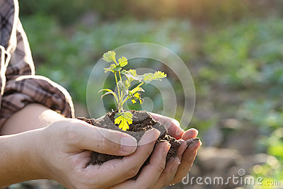 Soil cultivated dirt, earth, ground, agriculture land background Nurturing baby plant on hand.