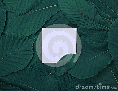 White empty leaf among green leaves of chestnut