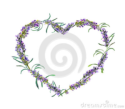 Lavender flowers. Watercolor floral heart frame