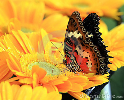 Colorful butterfly on flower