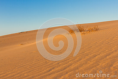 Divided photography on two part by sand and sky. Lands and panorama background. Sustainable ecosystem. Yellow dunes at
