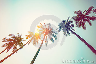 Coconut palm tree on beach and sunlight with vintage toned effec