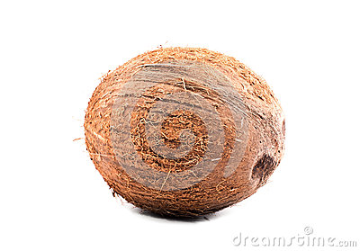 Close-up hard brown coconut on a bright white isolated background. A whole nut. Tasteful tropical nuts. Organic foods.