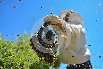 Aggressive bees and the bee colony