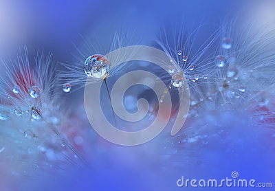 Tranquil Closeup Blue Background.Abstract Macro,water drops.Art photography.Beautiful Nature Wallpaper.Colorful.Natural,flowers.