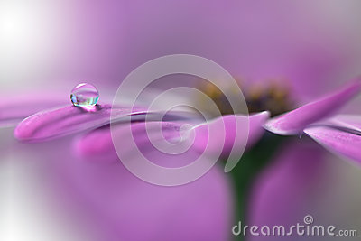Tranquil abstract closeup art background.Macro photography,water drops.Beautiful Nature.Floral Art.Creative Wallpaper.Celebration.