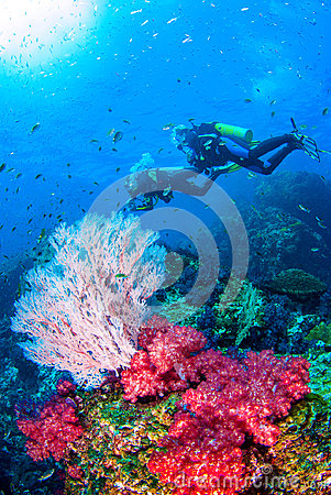 Scubadiving Similan,North Andaman Sea Thailand.
