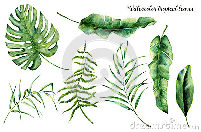 Watercolor set with tropical leaves. Hand painted palm branch, fern and leaf of magnolia. Tropic plant isolated on white
