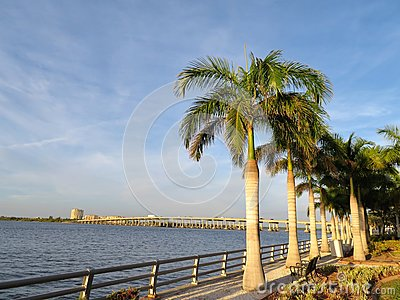 Palm trees along the Manatee River in Bradenton, Florida with a bridge in the background