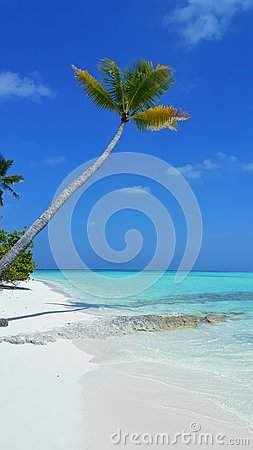 P00619 Maldives beautiful white sandy beach background with palm trees on sunny tropical paradise island with aqua blue sky sea wa
