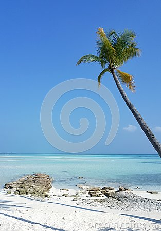 P00674 Maldives beautiful white sandy beach background with palm trees on sunny tropical paradise island with aqua blue sky sea wa