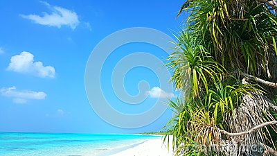 P00620 Maldives beautiful white sandy beach background with palm trees on sunny tropical paradise island with aqua blue sky sea wa