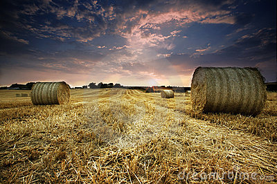 Bails of Golden Hay at Sunset