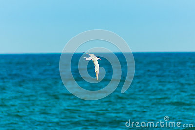 White bird seagull flying over turquoise sea, spread wings, clear blue sky. horizon, summer, freedom