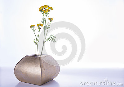 Yellow meadow flower in the vase