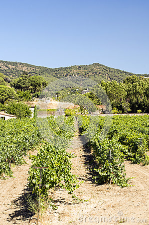 Vineyards of Alella