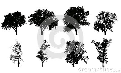 Set of vector realistic silhouettes of deciduous trees