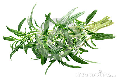 Summer savory Satureja hortensis bundle, paths