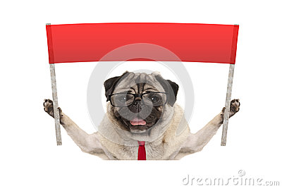 Business pug dog with tie and reading glasses, holding up red banner sign