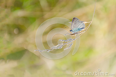 Autumn, summer nature background. The concept of nature. Blurred image of a butterfly on the meadow grass. Abstract nature backgro