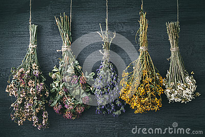 stock image of hanging bunches of medicinal herbs and flowers. herbal medicine.