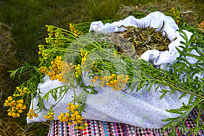 Bunch of a tansy ordinary Tanacetum vulgare L. lies on a linen bag with the dried-up medicinal vegetable raw materials
