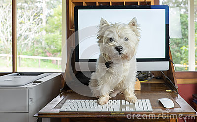 Bring dog to work day - west highland white terrier on desk with