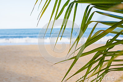 Vacation background. Beach with palm trees and blue sea