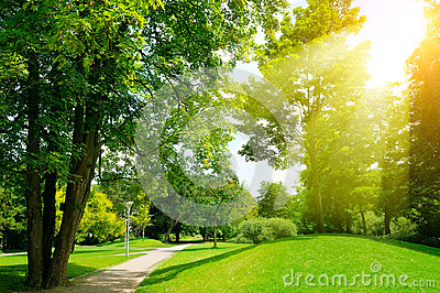 Bright sunny day in park. Sun rays illuminate green grass and tr