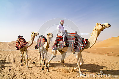 Guiding Camels in desert