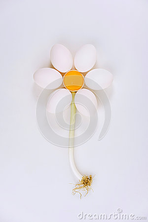 Chicken eggs arrange into flower shape